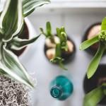 Bienfaits plantes d'intérieur (2)
